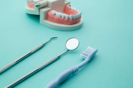 Dentist demonstration teeth model with flesh pink gums and dentist tool on blue background