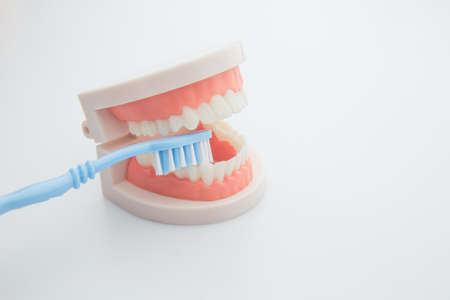 Dentistry, medicine, medical equipment and stomatology concept. Orthodontic model and dentist tool - teeth model with ceramic braces on an artificial jaws closeup. Jaw model with blue toothbrush on white background.