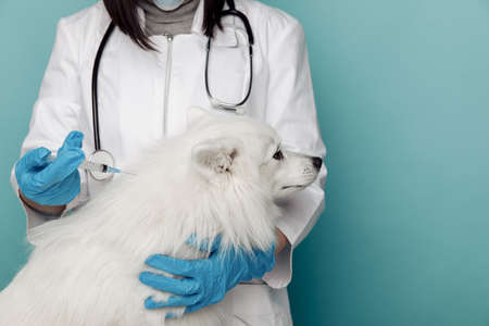 Veterinarian with syringe and white dog on table in vet clinic close-up