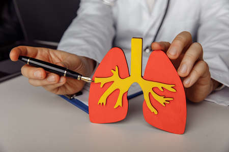 Doctor showing a wooden model of lung. Healthcare and treatment concept