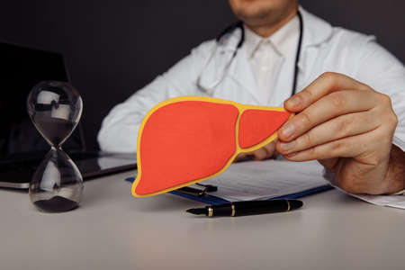 Wooden model of human liver in doctors hand. Concept of healthcare