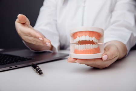 Doctor dentist shows a model of jaw in hand 版權商用圖片