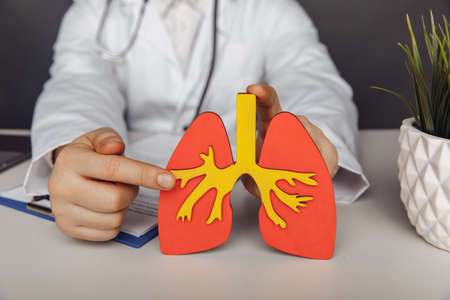 Healthcare and treatment concept. Doctor showing a wooden model of lung in his office