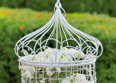 birdcage: Birdcage with flowers inside, hanging on a branch in green, fresh spring garden