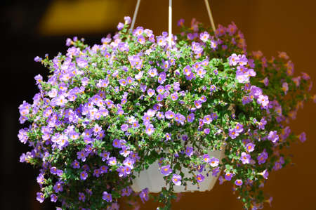 hanging flowers: Hanging flowers at the entrance to the restaurant Stock Photo