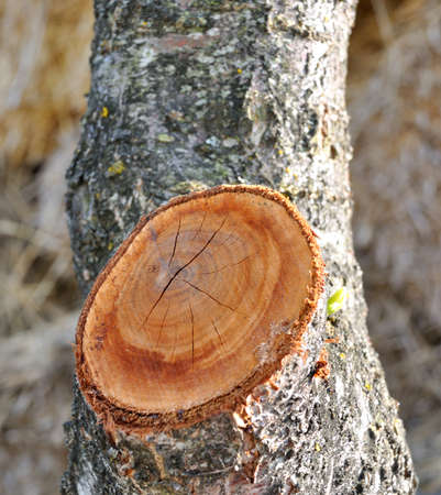 gash: Heart formation on the tree trunk Stock Photo
