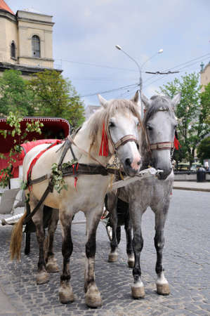 horse and carriage: Horse carriage Stock Photo