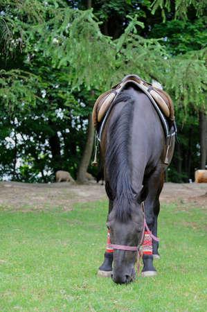saddle: Beautiful horse with a saddle on a farm