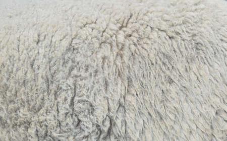 warm things: sheep wool texture background closeup