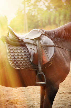 Saddle with stirrups on a  of a horse .