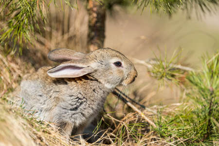 rabbit hare while looking at you on grass background 写真素材