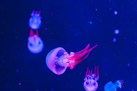 Beautiful jellyfish close up. Abstract background .
