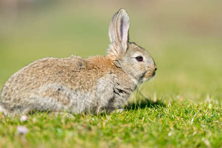 Rabbit hare while looking at you on grass background Imagens