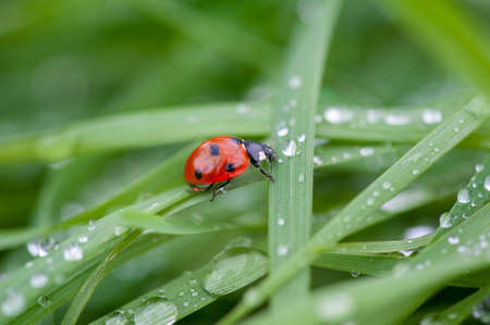 A ladybug sitting on a green leaf captured in a macro photo