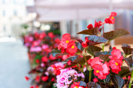 Flowers on the terrace in the restaurant
