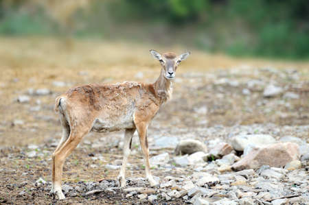 Deer on a background of wildlife. Wildlife scene.