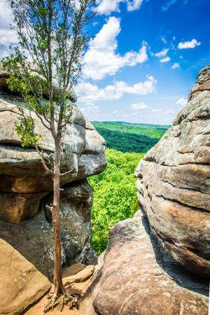 風化ツリー砂岩岩に囲まれて、隙間からすることができます見てショーニー国有林