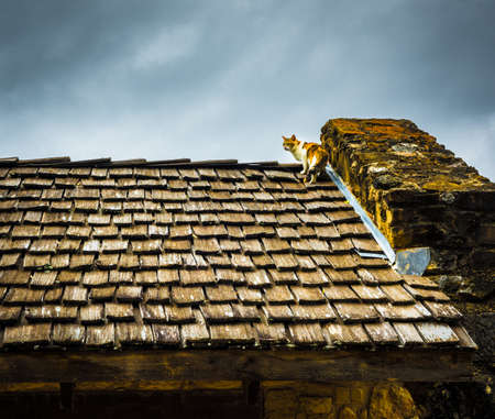 Shake Shingles: A Cat Pauses To Look While Climbing To The Top Of A  Buildings