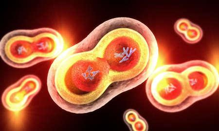 분열 핵, 세포막 및 눈에 보이는 염색체가있는 투명한 세포