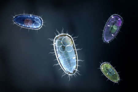 Four transparent and colorful protozoons or unicellular organism on an dark blue background.