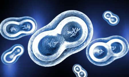 membrana cellulare: celle trasparenti con la scissione nucleo, membrana cellulare e cromosomi visibili