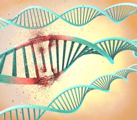 human evolution: Illustration of a damaged ribonucleic acid or  dna strand