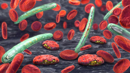 3d illustration of blood cells, plasmodium causing malaria illness