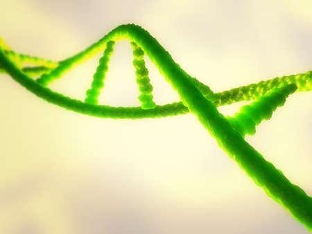 human evolution: Illustration of a ribonucleic acid or  dna strand
