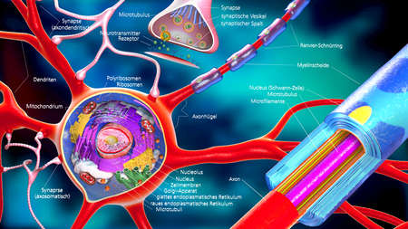 synaptic: colorful 3d illustration of a neuron and cell-building with german descriptions