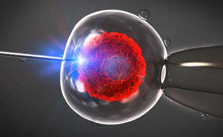 human evolution: Illustration of an artificial insemination or in-vitro fertilization of an egg cell,ovum or zygote