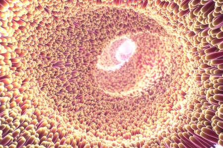 3d illustration of microscopic closeup of intestine villus Stock Photo