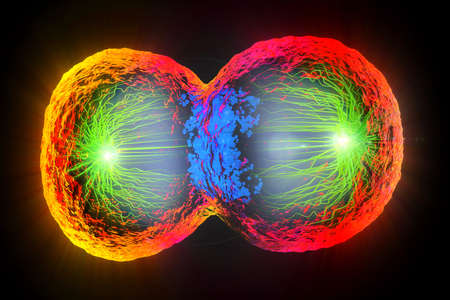 3d illustration of colorful cell division, cell membrane and splitting nucleus Stock fotó - 97493334