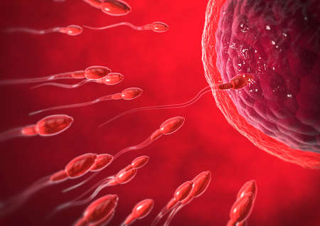 3d illustration of red transparent sperm cells swimming towards egg cell