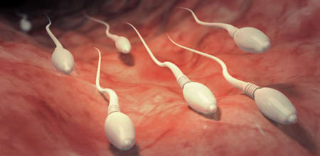 3d illustration of sperm cells moving towards egg cell into the womb Stock Photo
