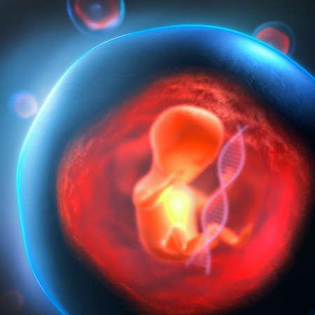 3D-Darstellung eines ungeborenen genetisch veränderten Embryos, der in einer transparenten Blase mit einem DNA-Strang gefangen ist
