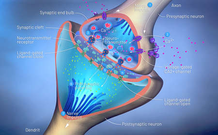 3d illustration of the scientific function of a synapse or neuronal connection with a nerve cell Banque d'images - 118667446