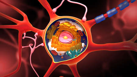 Cross section of a neuron and cell-building with its different parts - 3D illustration