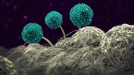Three mold spores - 3d illustration