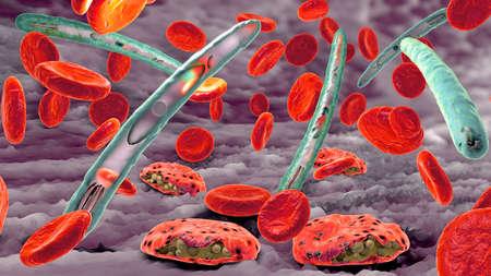 Malaria pathogen causing malaria illness and blood cells into blood circulation - 3d illustration Stok Fotoğraf