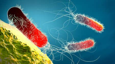 Red colored multiple antibiotic resistant Pseudomonas aeruginosa bacterium - 3d illustration
