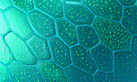 Pattern of plant cells with nucleus and membrane - 3d illustration
