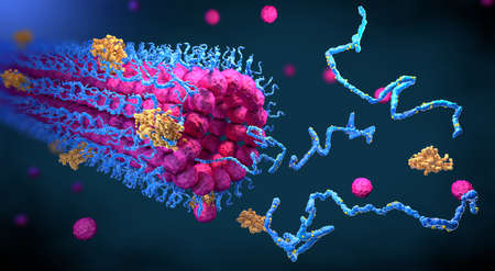 Protein enzymes fold into their structure to fulfill their function - 3d illustration