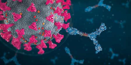 Immunoglobulin or antibody proteins attack a  virus pathogen cell - 3d illustration