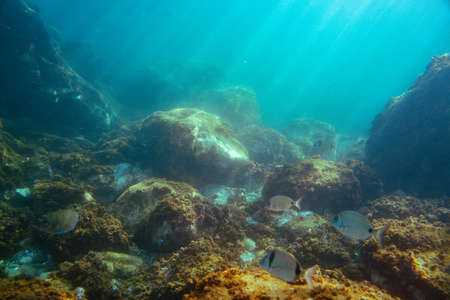 Underwater photo near the coast of flora and fauna on rocky seabed Standard-Bild - 164223334