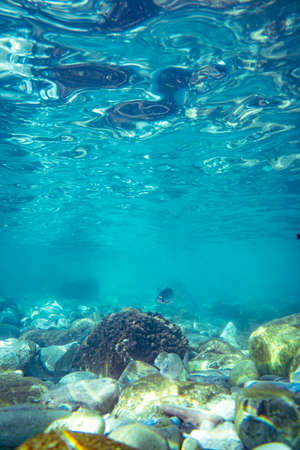 Underwater photo near the coast of flora and fauna on rocky seabed Standard-Bild - 164223197