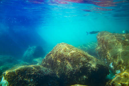 Underwater photo near the coast of flora and fauna on rocky seabed