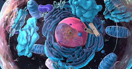 Components of Eukaryotic cell, nucleus and organelles and plasma membrane - 3d illustration Imagens