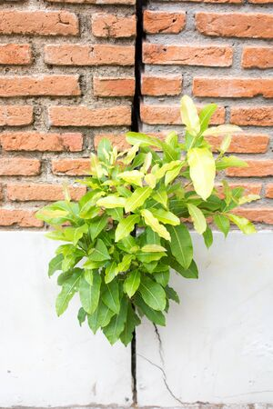 vegetate: Tree inserted between the wall