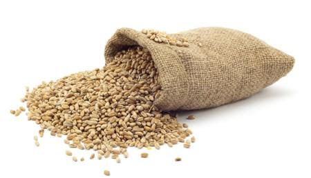 farming plant: bag of wheat on a white background Stock Photo