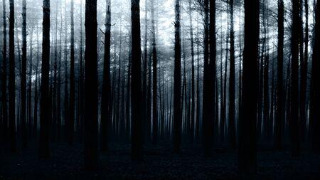 black an white: puesta de sol en el bosque oscuro para el dise�o de usted Foto de archivo